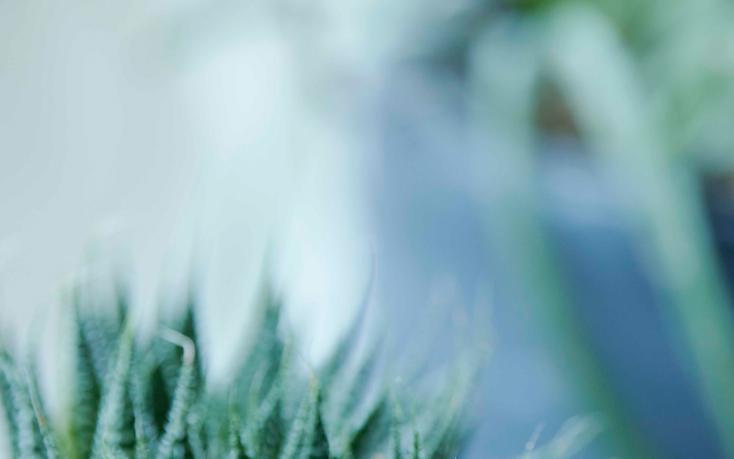TRETTIO GRADの植物