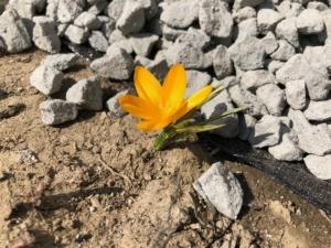 ♪春ですね(^^♪