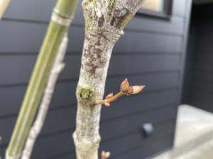 芽吹きの春