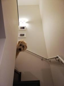 いろんな階段